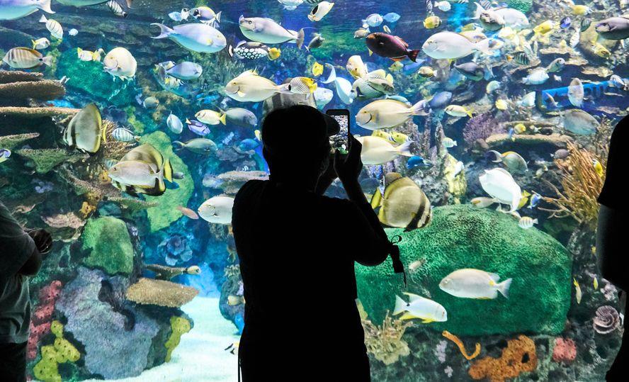 Ripley's Aquarium in Canada